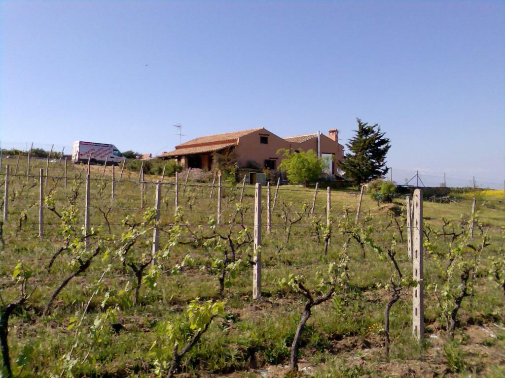 Der Weinberg von VillaVino.