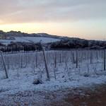 Winterimpressionen - jetzt hat der Weinberg mal Pause. Was unglaublich ist, ist die frische Luft.
