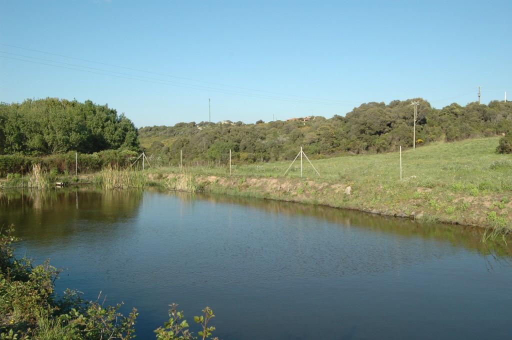 Viel frisches Wasser im Teich aus eigener Quelle!